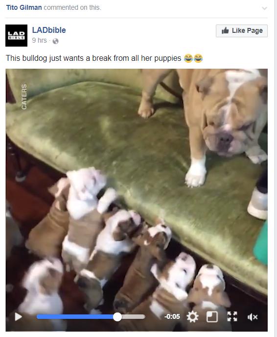 facebook marketing for veterinary