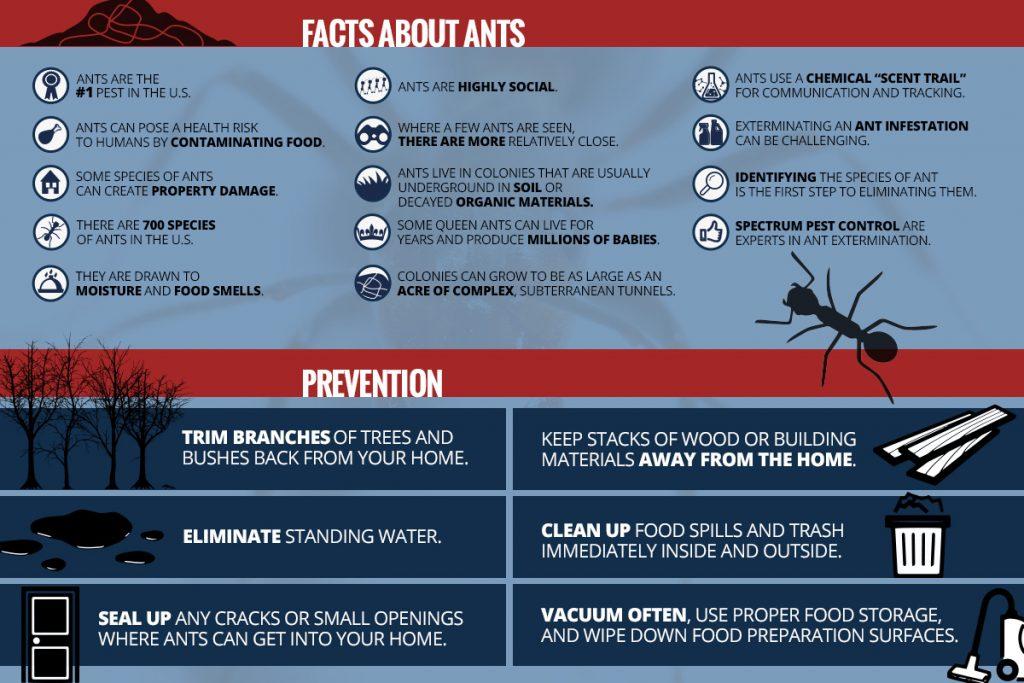 pest control infographic
