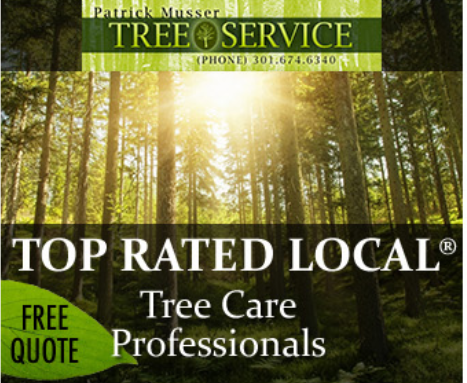 tree care lead generation retargeting ad