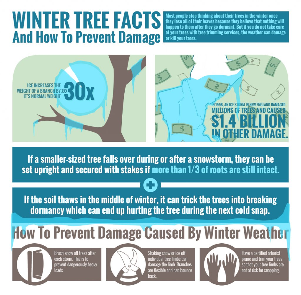 tree care marketing infographic